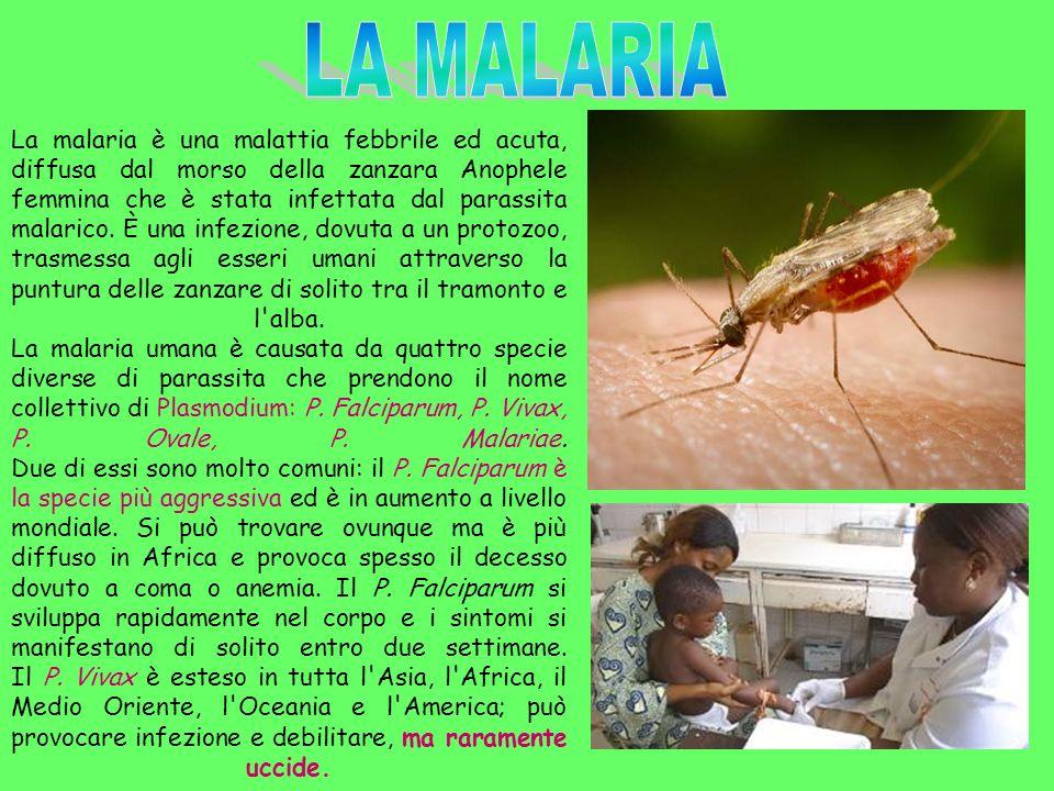 La malaria è una malattia febbrile ed acuta, diffusa dal morso della zanzara Anophele femmina che è stata infettata dal parassita malarico. È una infe