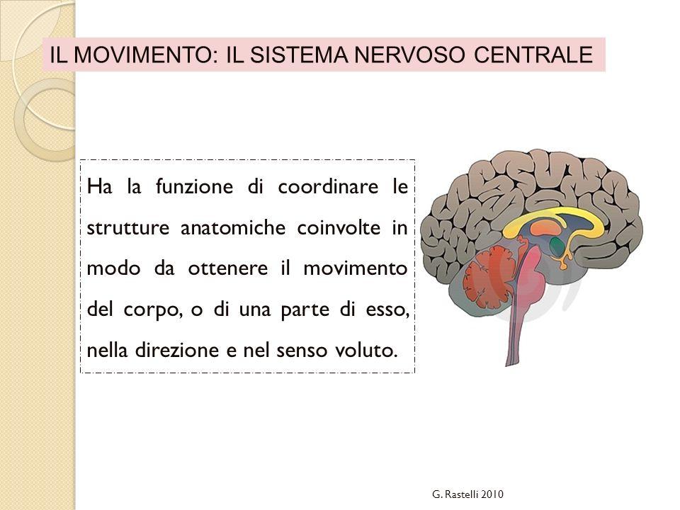 IL MOVIMENTO: IL SISTEMA NERVOSO CENTRALE Ha la funzione di coordinare le strutture anatomiche coinvolte in modo da ottenere il movimento del corpo, o