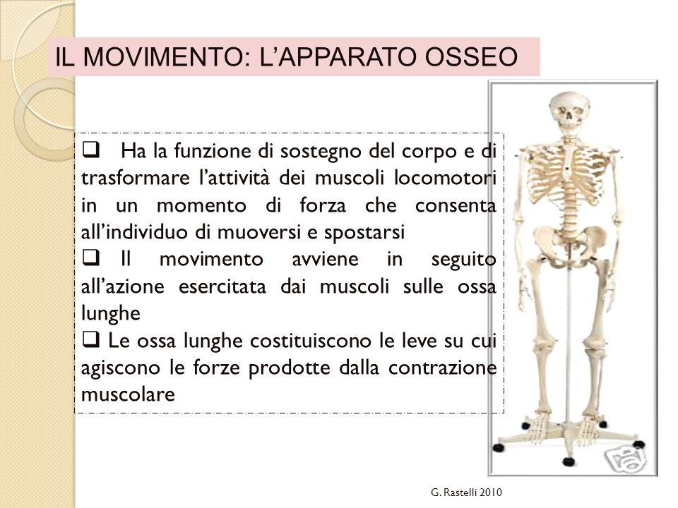 IL MOVIMENTO: LAPPARATO OSSEO G. Rastelli 2010 Ha la funzione di sostegno del corpo e di trasformare lattività dei muscoli locomotori in un momento di