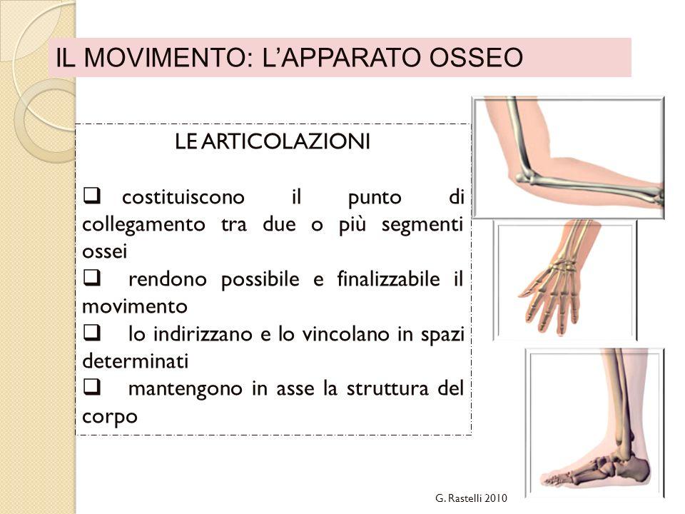 IL MOVIMENTO: LAPPARATO OSSEO LE ARTICOLAZIONI costituiscono il punto di collegamento tra due o più segmenti ossei rendono possibile e finalizzabile i
