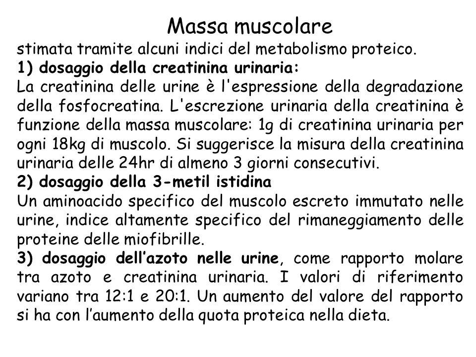 Massa muscolare stimata tramite alcuni indici del metabolismo proteico. 1) dosaggio della creatinina urinaria: La creatinina delle urine è l'espressio