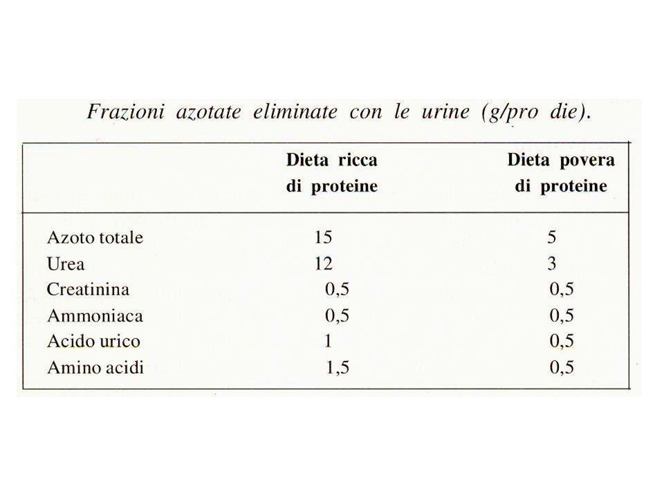 FABBISOGNO PER IL MANTENIMENTO 0,6 g/Kg peso corporeo/giorno (96 mg N/kg).