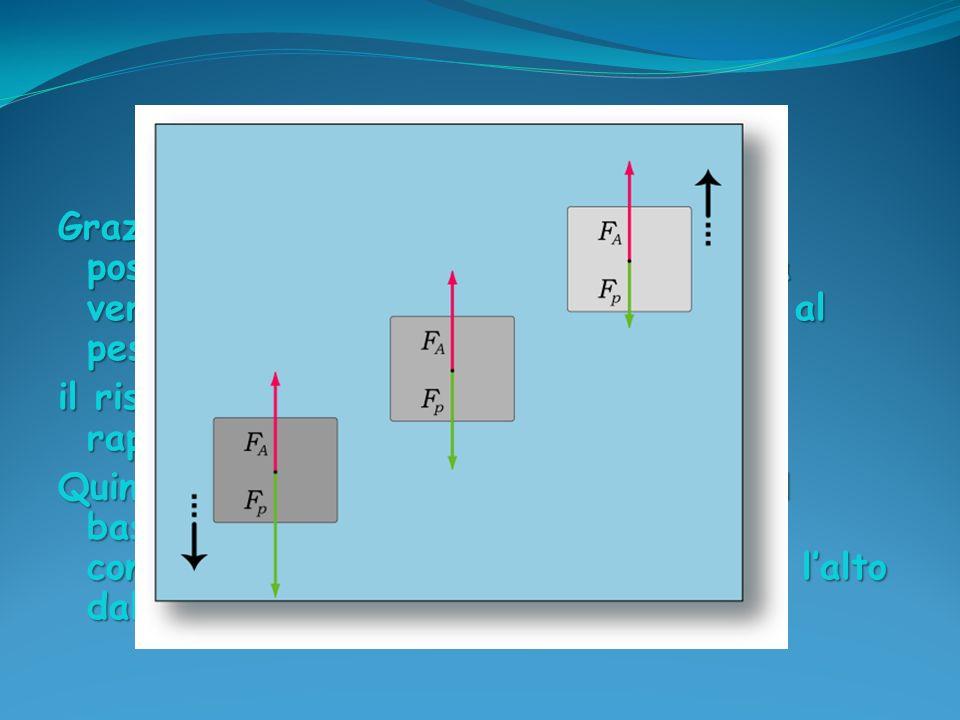 Grazie alla dimostrazione del principio possiamo comprendere perché la spinta verso lalto che subisce il corpo è pari al peso del fluido spostato: il