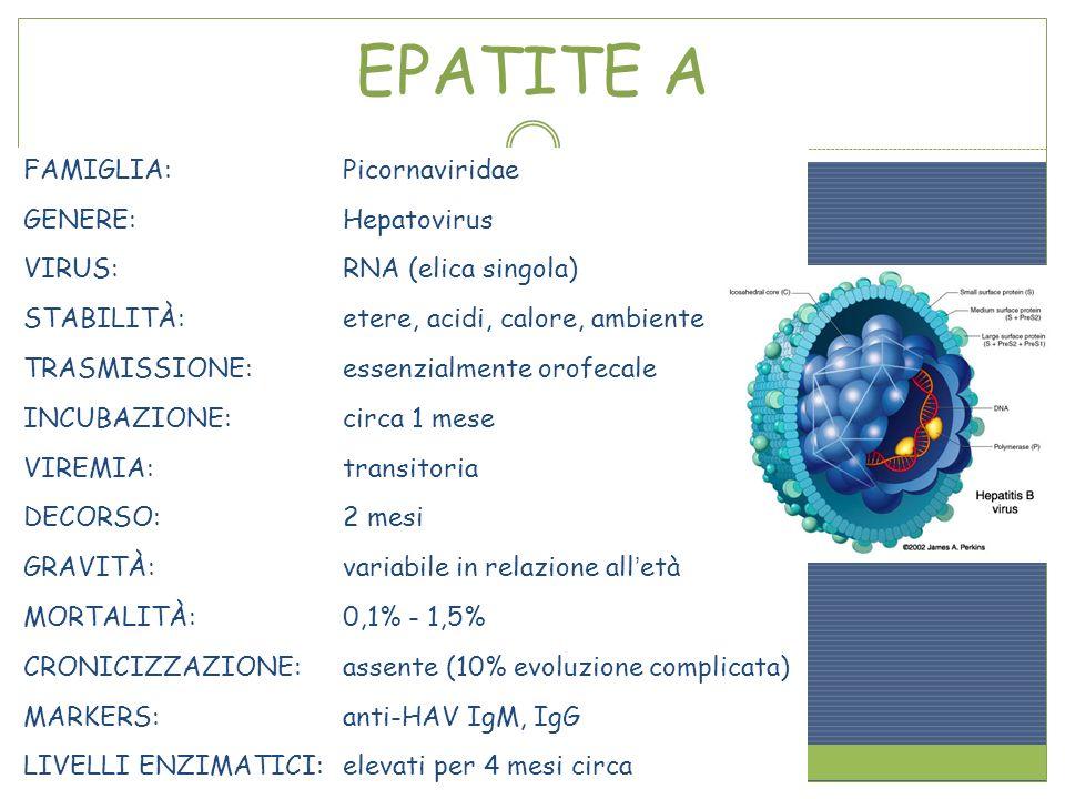 FAMIGLIA:Picornaviridae GENERE:Hepatovirus VIRUS:RNA (elica singola) STABILITÀ:etere, acidi, calore, ambiente TRASMISSIONE:essenzialmente orofecale IN