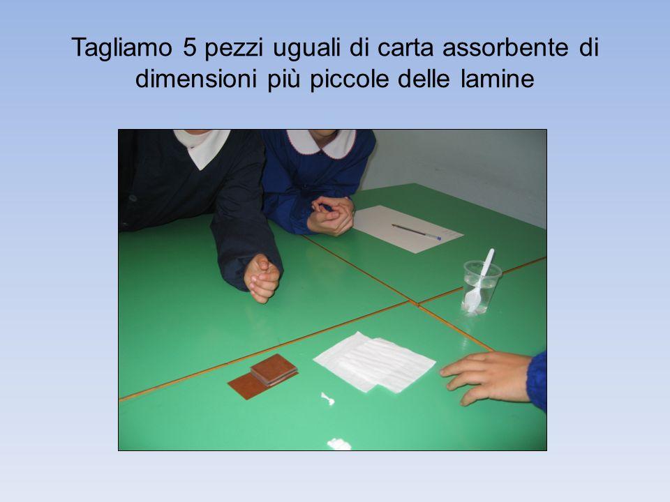 Tagliamo 5 pezzi uguali di carta assorbente di dimensioni più piccole delle lamine