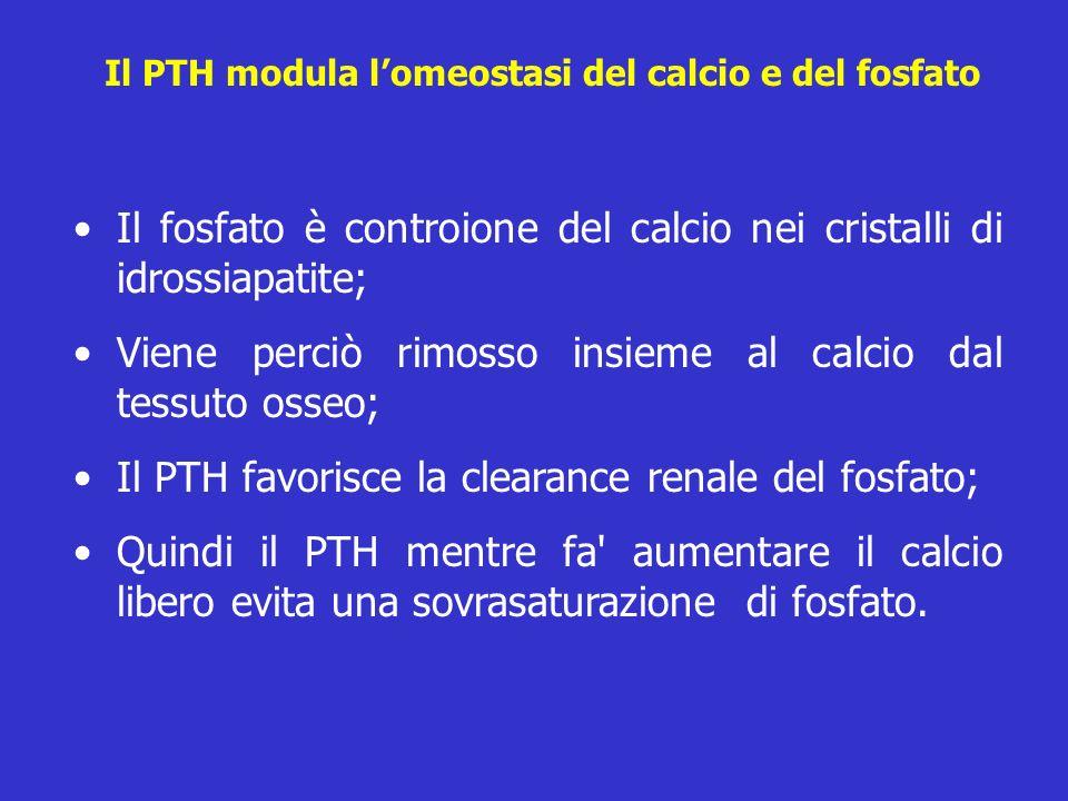 Il PTH modula lomeostasi del calcio e del fosfato Il fosfato è controione del calcio nei cristalli di idrossiapatite; Viene perciò rimosso insieme al
