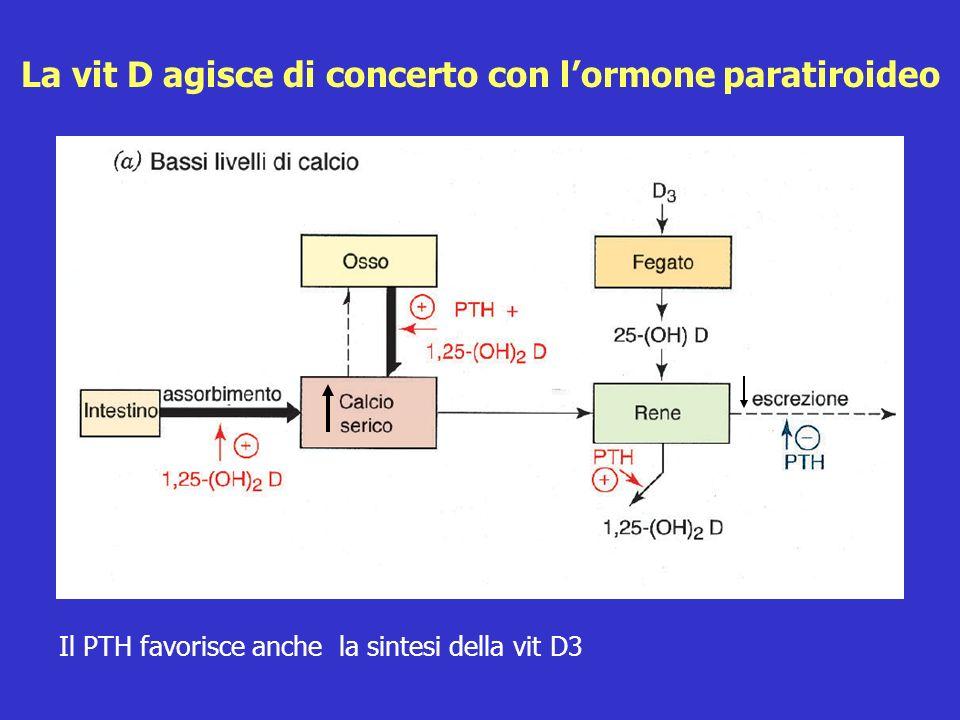 La vit D agisce di concerto con lormone paratiroideo Il PTH favorisce anche la sintesi della vit D3