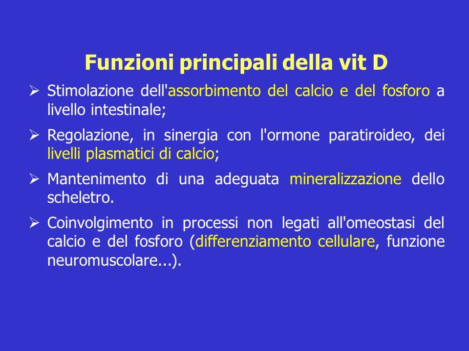 Funzioni principali della vit D Stimolazione dell'assorbimento del calcio e del fosforo a livello intestinale; Regolazione, in sinergia con l'ormone p