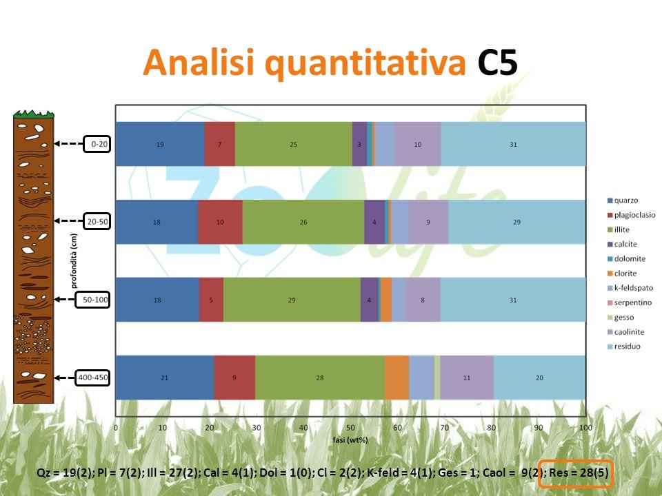 Analisi quantitativa C5 Qz = 19(2); Pl = 7(2); Ill = 27(2); Cal = 4(1); Dol = 1(0); Cl = 2(2); K-feld = 4(1); Ges = 1; Caol = 9(2); Res = 28(5)