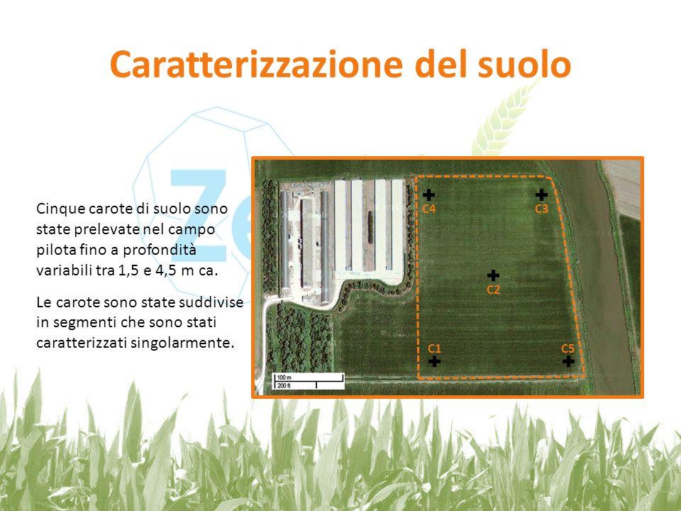 Caratterizzazione del suolo Cinque carote di suolo sono state prelevate nel campo pilota fino a profondità variabili tra 1,5 e 4,5 m ca. Le carote son