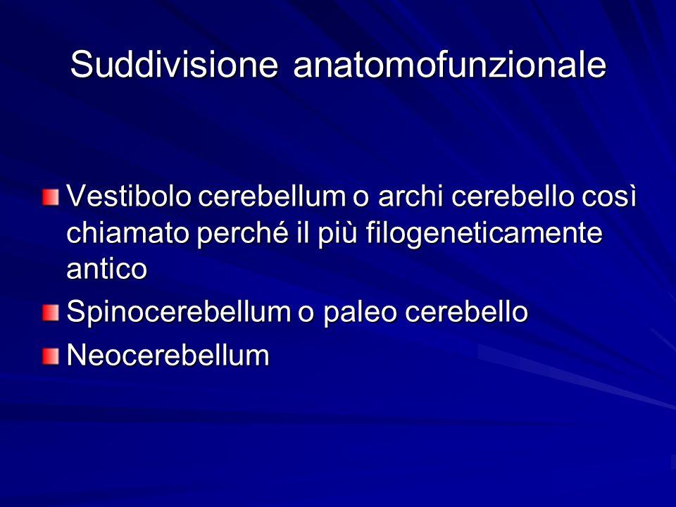 Suddivisione anatomofunzionale Vestibolo cerebellum o archi cerebello così chiamato perché il più filogeneticamente antico Spinocerebellum o paleo cer