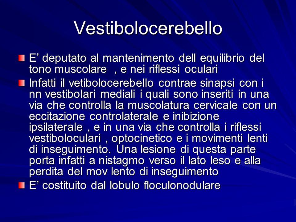 Vestibolocerebello E deputato al mantenimento dell equilibrio del tono muscolare, e nei riflessi oculari Infatti il vetibolocerebello contrae sinapsi
