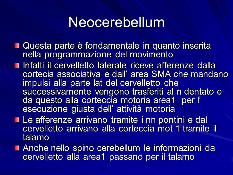 Neocerebellum Questa parte è fondamentale in quanto inserita nella programmazione del movimento Infatti il cervelletto laterale riceve afferenze dalla