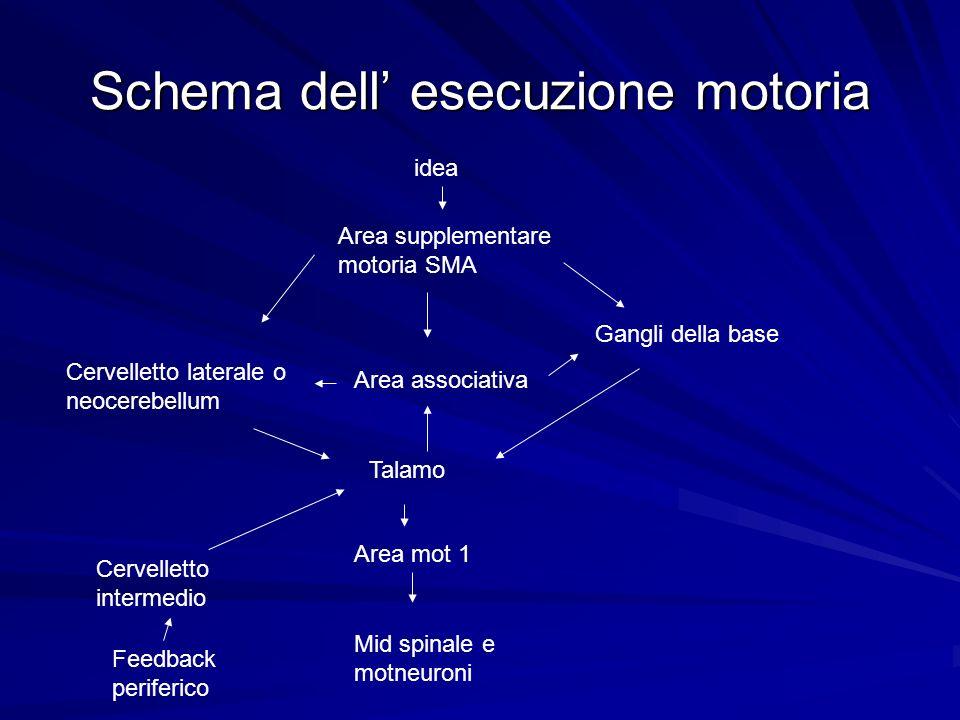 Schema dell esecuzione motoria idea Area supplementare motoria SMA Cervelletto laterale o neocerebellum Area associativa Gangli della base Talamo Area