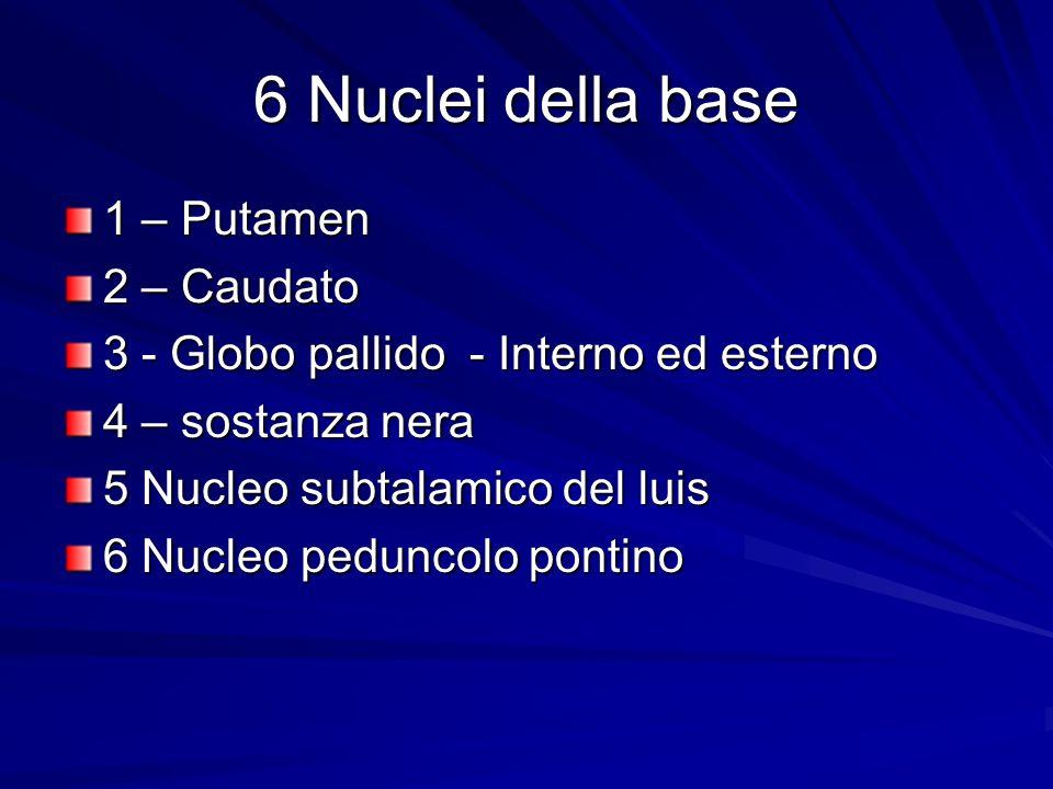 6 Nuclei della base 1 – Putamen 2 – Caudato 3 - Globo pallido - Interno ed esterno 4 – sostanza nera 5 Nucleo subtalamico del luis 6 Nucleo peduncolo