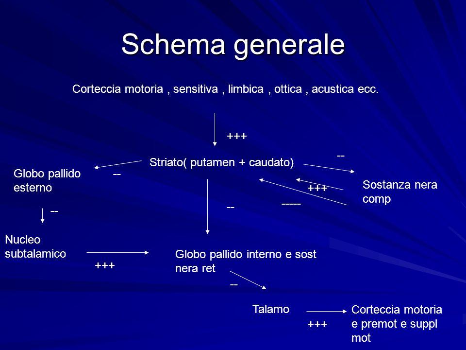 Schema generale Corteccia motoria, sensitiva, limbica, ottica, acustica ecc. Globo pallido esterno Nucleo subtalamico Globo pallido interno e sost ner