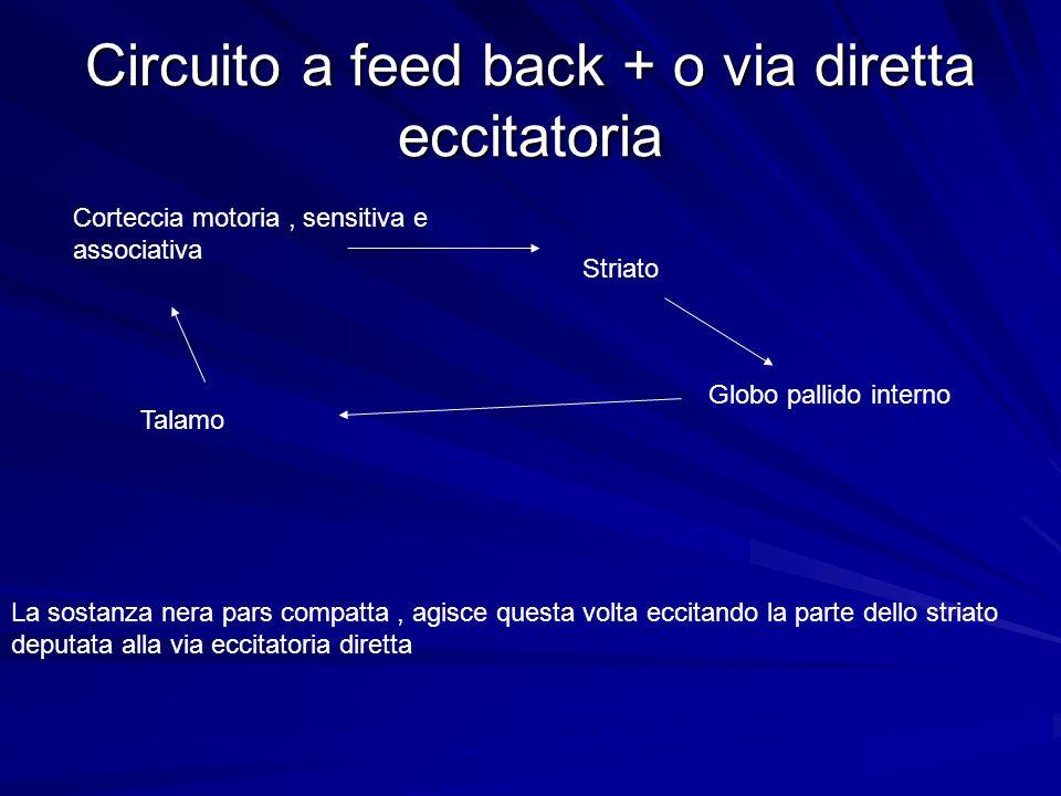 Circuito a feed back + o via diretta eccitatoria Corteccia motoria, sensitiva e associativa Striato Globo pallido interno Talamo La sostanza nera pars