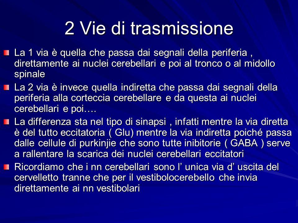 2 Vie di trasmissione La 1 via è quella che passa dai segnali della periferia, direttamente ai nuclei cerebellari e poi al tronco o al midollo spinale