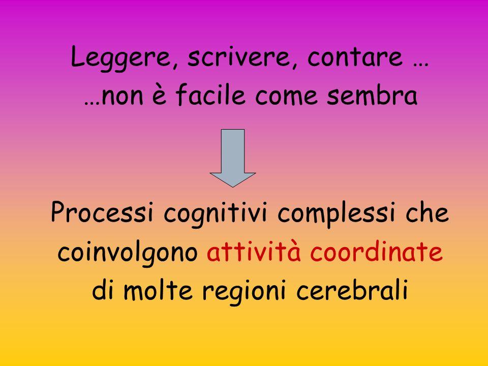 Leggere, scrivere, contare … …non è facile come sembra Processi cognitivi complessi che coinvolgono attività coordinate di molte regioni cerebrali