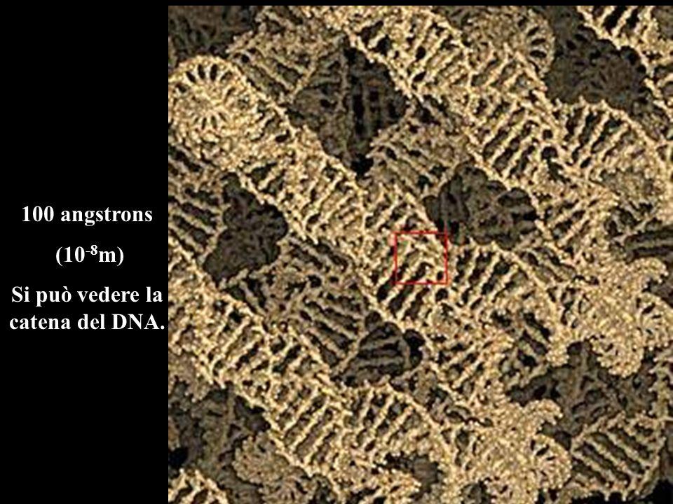 100 angstrons (10 -8 m) Si può vedere la catena del DNA.
