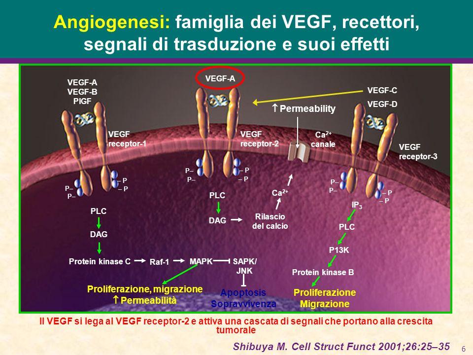 6 Angiogenesi: famiglia dei VEGF, recettori, segnali di trasduzione e suoi effetti Shibuya M. Cell Struct Funct 2001;26:25–35 Il VEGF si lega al VEGF