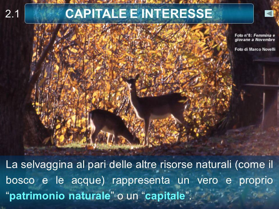 2.1 CAPITALE E INTERESSE La selvaggina al pari delle altre risorse naturali (come il bosco e le acque) rappresenta un vero e propriopatrimonio naturale o un capitale.