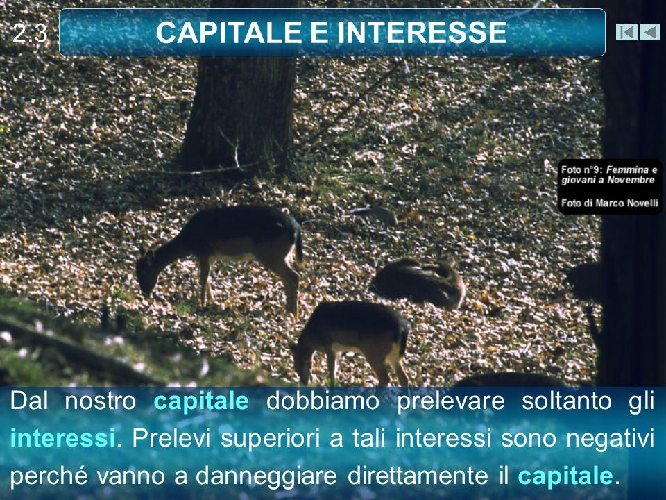 Dal nostro capitale dobbiamo prelevare soltanto gli interessi.