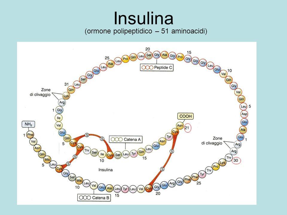 Insulina (ormone polipeptidico – 51 aminoacidi)