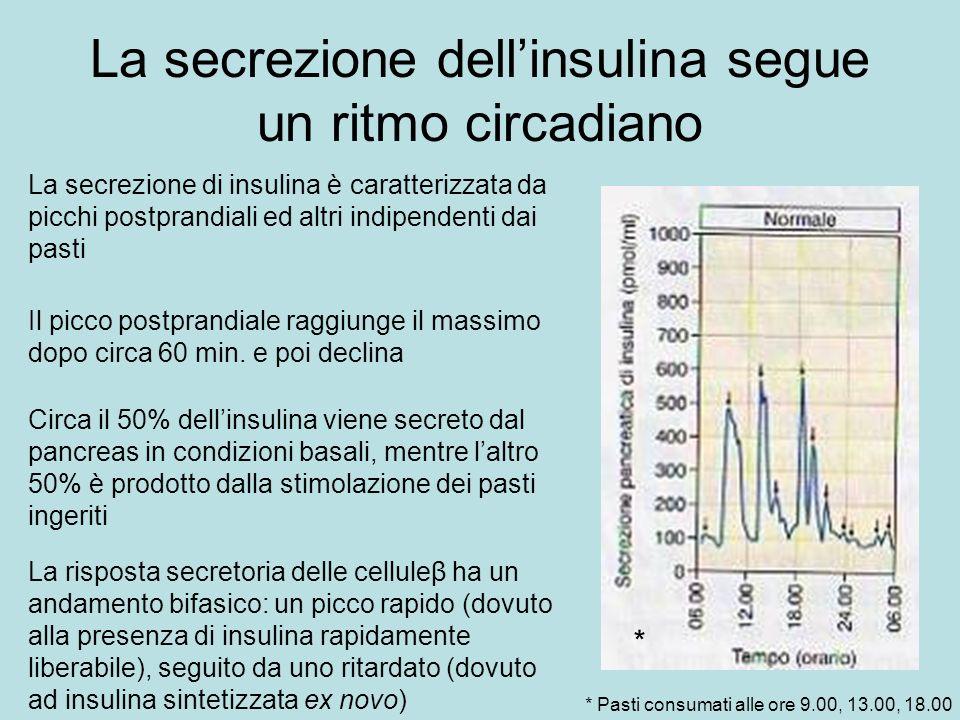 La secrezione dellinsulina segue un ritmo circadiano La secrezione di insulina è caratterizzata da picchi postprandiali ed altri indipendenti dai past