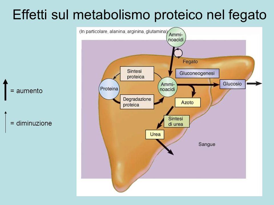 Effetti sul metabolismo proteico nel fegato = aumento = diminuzione (In particolare, alanina, arginina, glutamina)