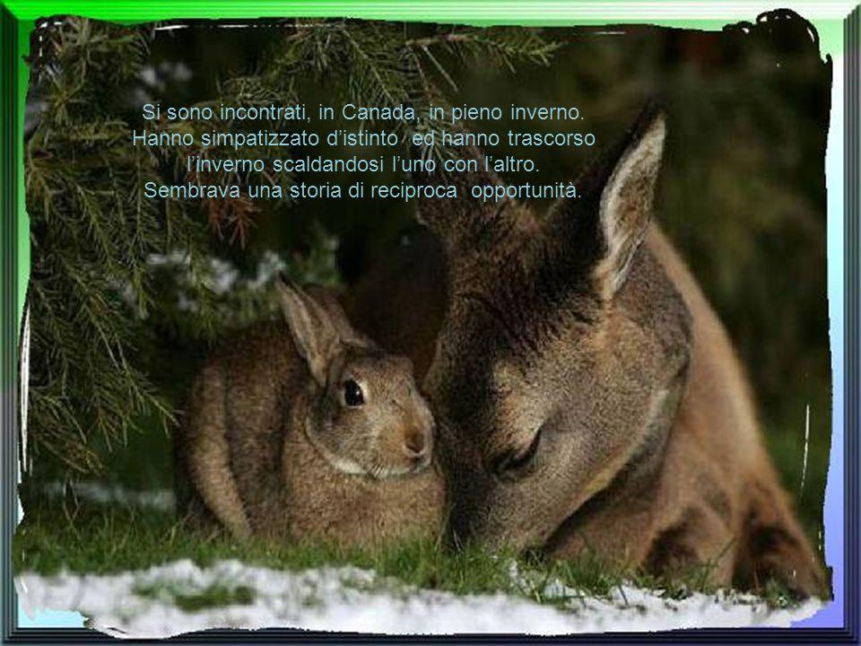 Si sono incontrati, in Canada, in pieno inverno.
