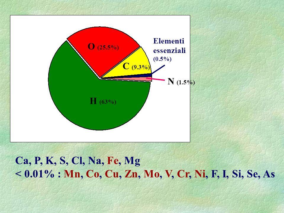 99.3% H (63%) O (25.5%) C (9.3%) N (1.5%) Elementi essenziali (0.5%) Ca, P, K, S, Cl, Na, Fe, Mg < 0.01% : Mn, Co, Cu, Zn, Mo, V, Cr, Ni, F, I, Si, Se
