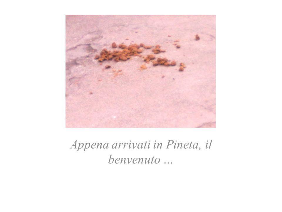 Appena arrivati in Pineta, il benvenuto …