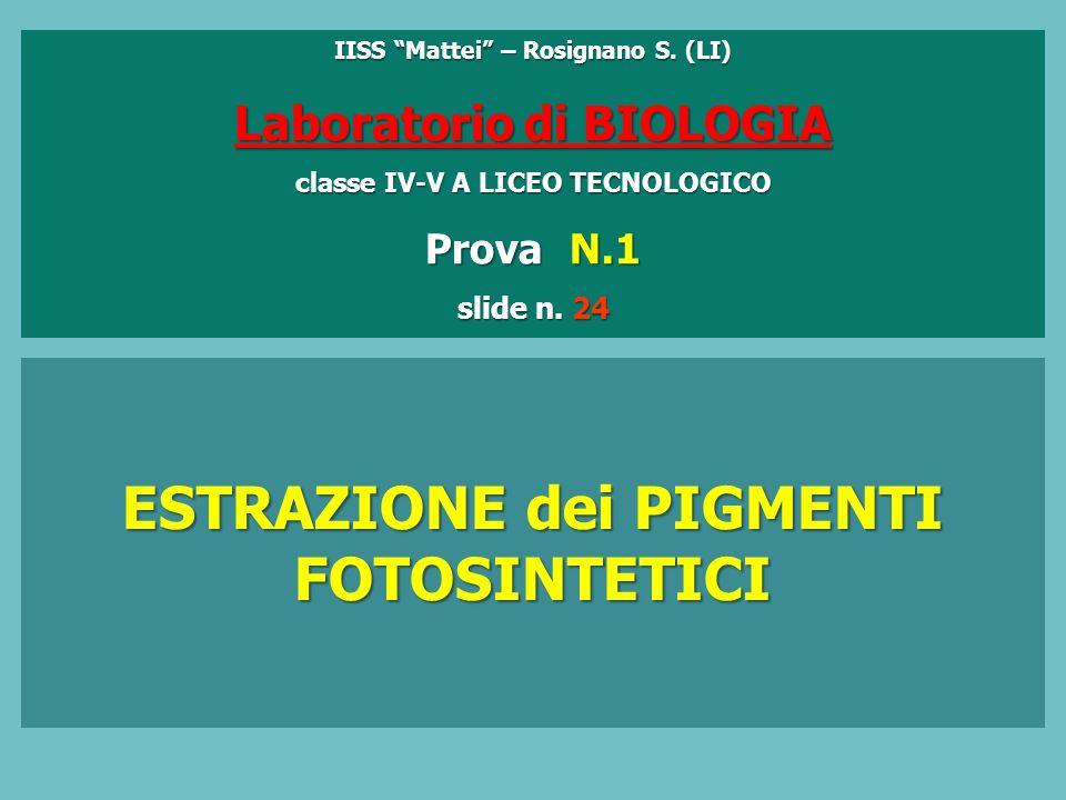 IISS Mattei – Rosignano S.