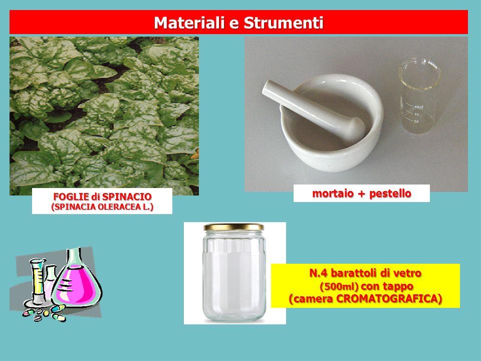 FOGLIE di SPINACIO (SPINACIA OLERACEA L.) N.4 barattoli di vetro (500ml) con tappo (500ml) con tappo (camera CROMATOGRAFICA) mortaio + pestello Materiali e Strumenti