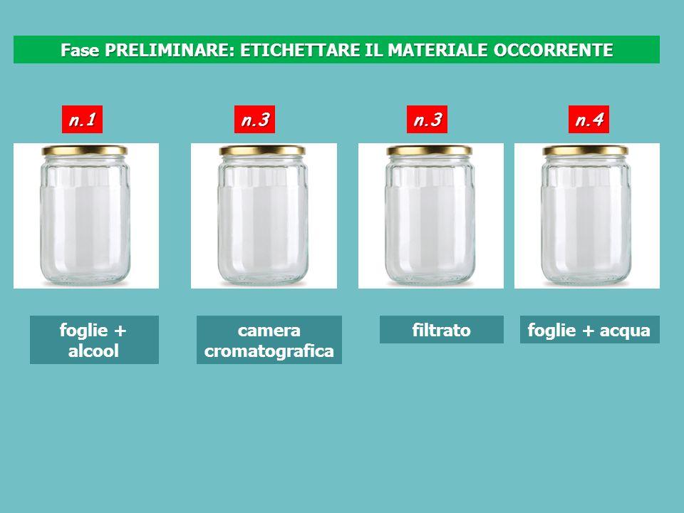 foglie + alcool camera cromatografica filtratofoglie + acqua Fase PRELIMINARE: ETICHETTARE IL MATERIALE OCCORRENTE n.1n.3n.3n.4
