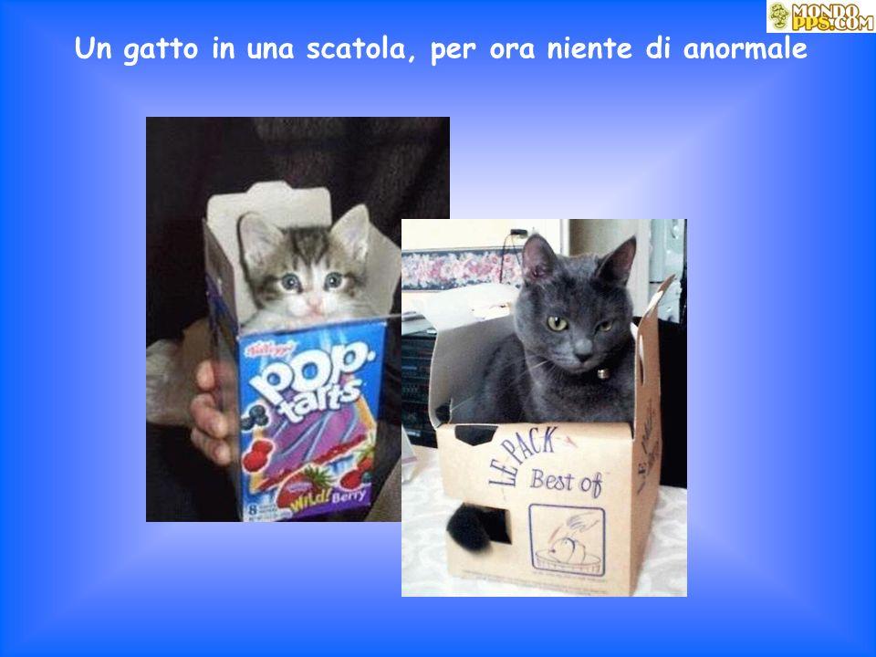 Un gatto in una scatola, per ora niente di anormale