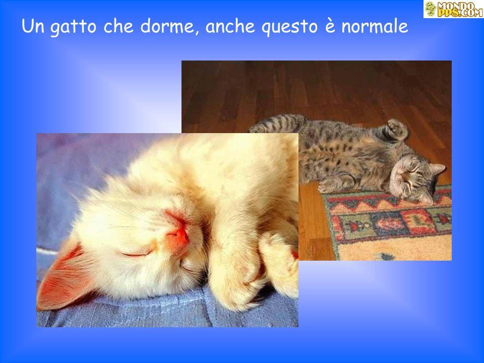 Un gatto che dorme, anche questo è normale