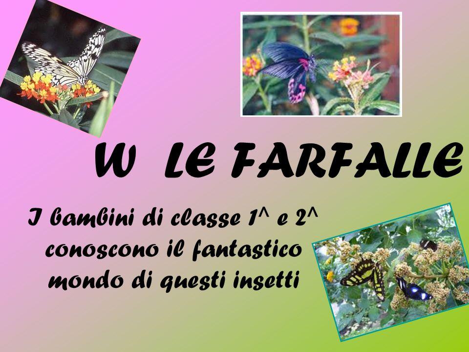 W LE FARFALLE I bambini di classe 1^ e 2^ conoscono il fantastico mondo di questi insetti