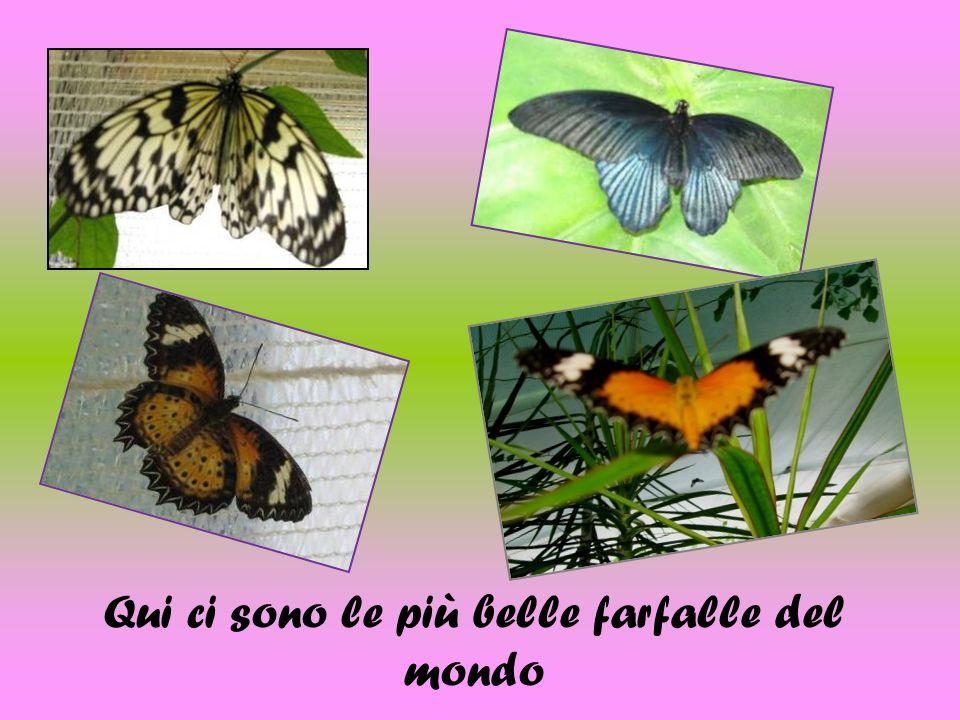 Qui ci sono le più belle farfalle del mondo