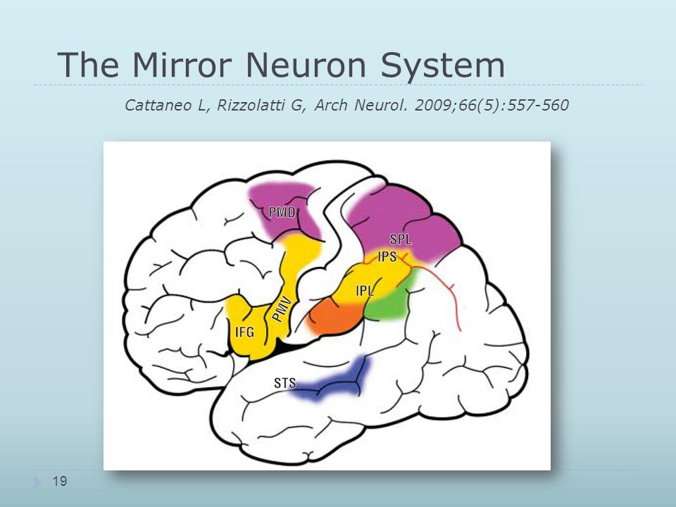 The Mirror Neuron System Cattaneo L, Rizzolatti G, Arch Neurol. 2009;66(5):557-560 19