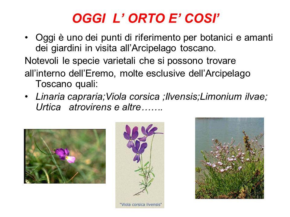 OGGI L ORTO E COSI Oggi è uno dei punti di riferimento per botanici e amanti dei giardini in visita allArcipelago toscano.