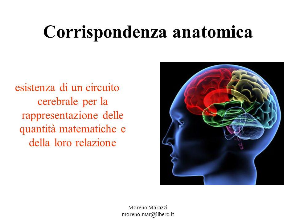 Corrispondenza anatomica esistenza di un circuito cerebrale per la rappresentazione delle quantità matematiche e della loro relazione Moreno Marazzi moreno.mar@libero.it