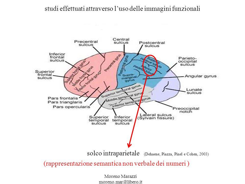 studi effettuati attraverso luso delle immagini funzionali solco intraparietale (Dehaene, Piazza, Pinel e Cohen, 2003) (rappresentazione semantica non verbale dei numeri ) Moreno Marazzi moreno.mar@libero.it