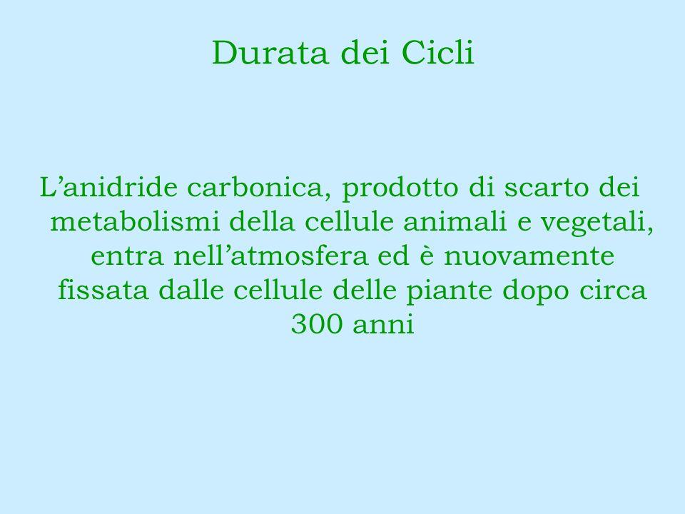 Lanidride carbonica, prodotto di scarto dei metabolismi della cellule animali e vegetali, entra nellatmosfera ed è nuovamente fissata dalle cellule de