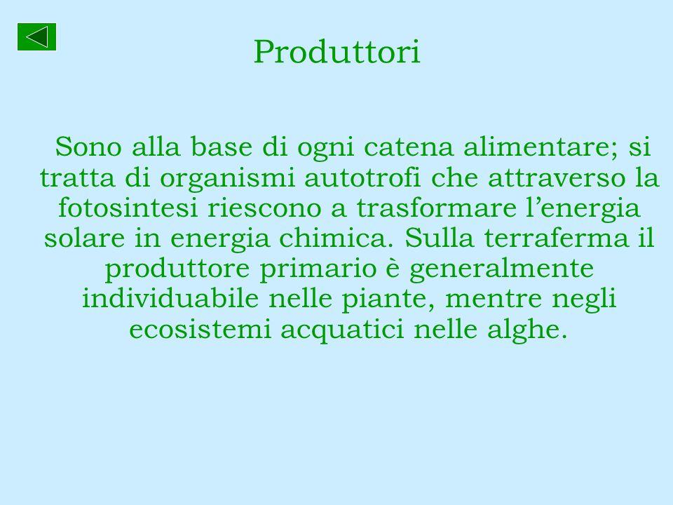 Produttori Sono alla base di ogni catena alimentare; si tratta di organismi autotrofi che attraverso la fotosintesi riescono a trasformare lenergia so