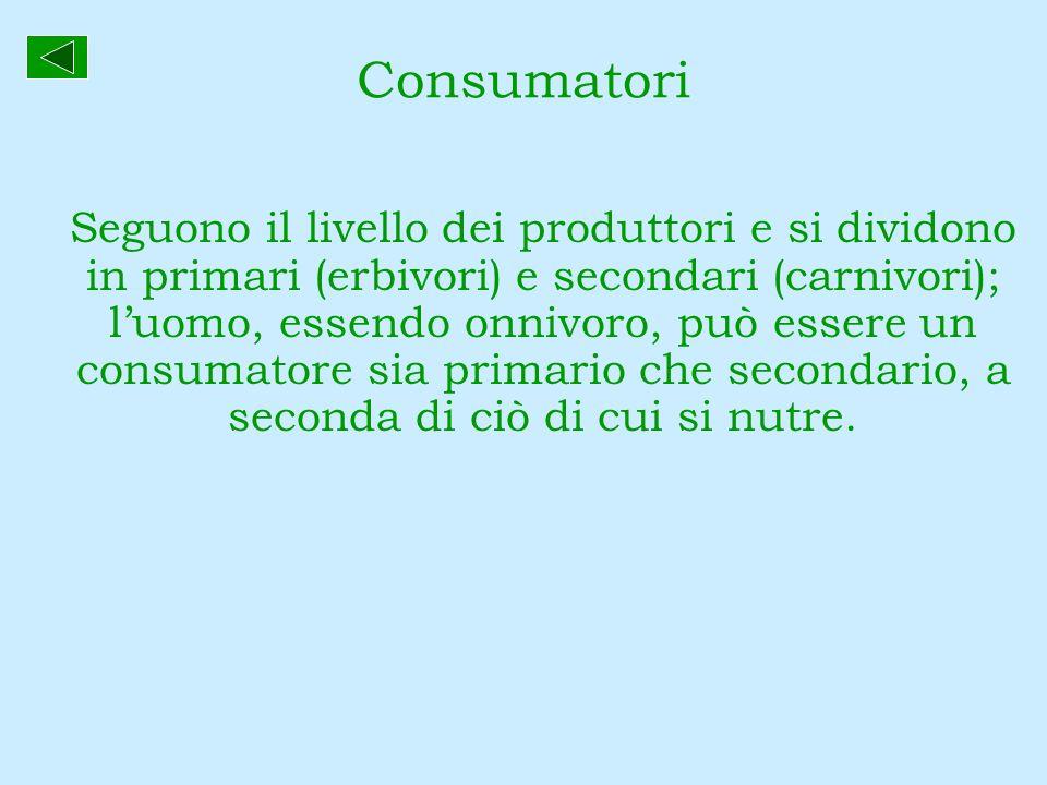 Consumatori Seguono il livello dei produttori e si dividono in primari (erbivori) e secondari (carnivori); luomo, essendo onnivoro, può essere un cons