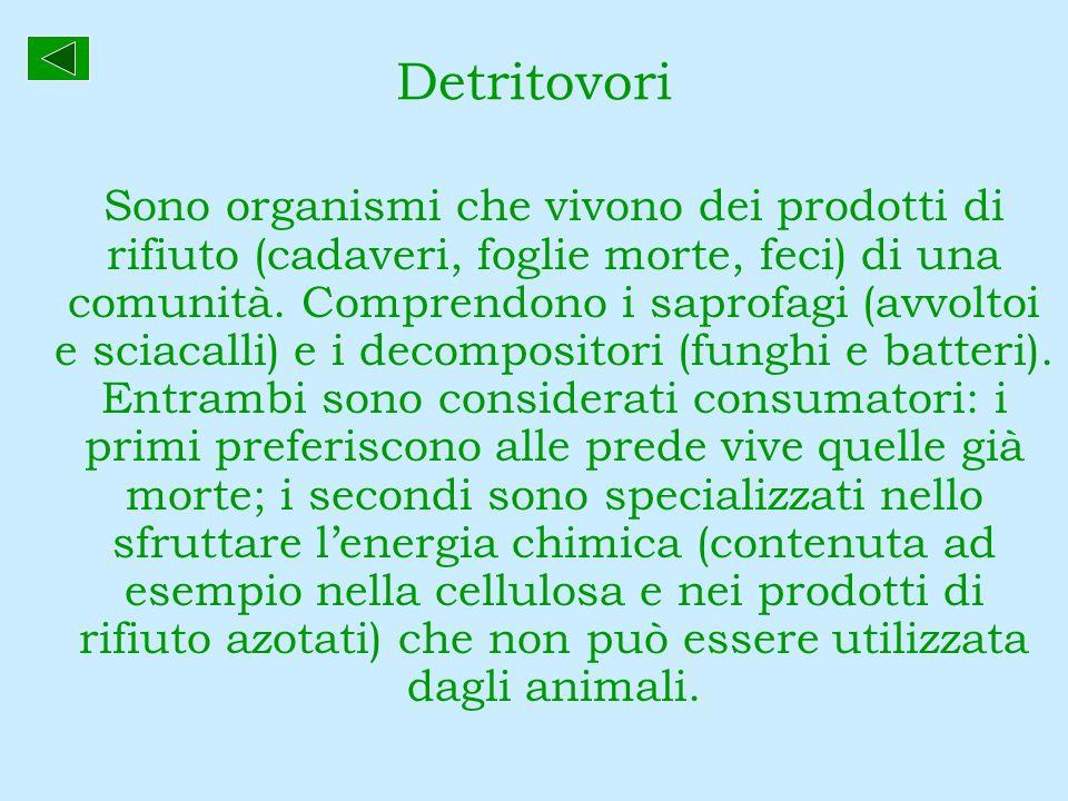 Detritovori Sono organismi che vivono dei prodotti di rifiuto (cadaveri, foglie morte, feci) di una comunità. Comprendono i saprofagi (avvoltoi e scia