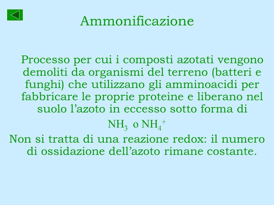 Ammonificazione Processo per cui i composti azotati vengono demoliti da organismi del terreno (batteri e funghi) che utilizzano gli amminoacidi per fa