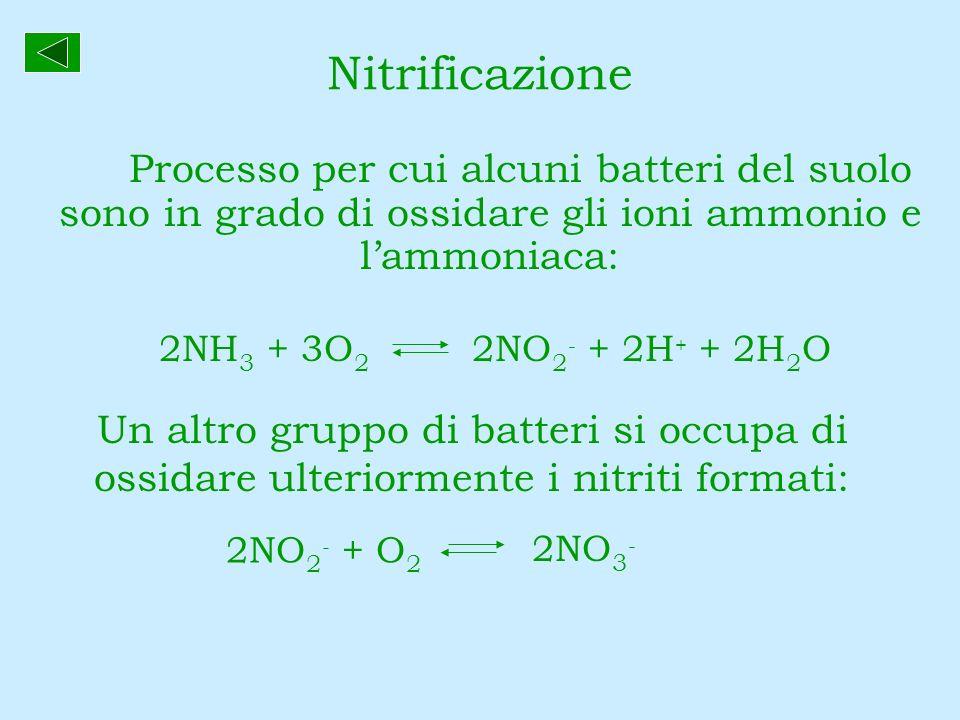 Nitrificazione Processo per cui alcuni batteri del suolo sono in grado di ossidare gli ioni ammonio e lammoniaca: 2NH 3 + 3O 2 2NO 2 - + 2H + + 2H 2 O